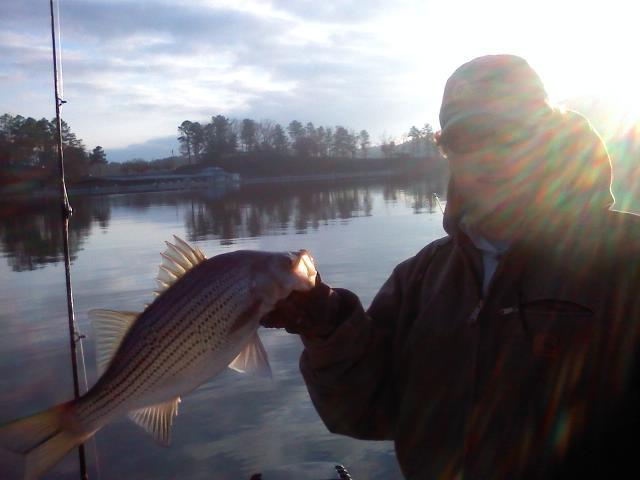lake-allatoona-striper-1