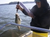 lake-allatoona-striper-16
