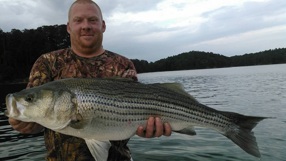 Allatoona-Striped-Bass-14