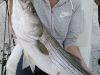 Allatoona-Striped-Bass-10
