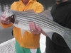 Allatoona-Striped-Bass-2