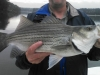 Allatoona-Striped-Bass-4