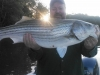Allatoona-Striped-Bass-5
