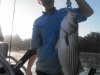 Allatoona-Striped-Bass-6